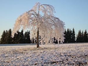 tree_orbach_law